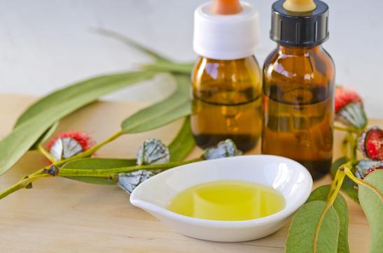 Eukalyptusöl gegen Erkältung